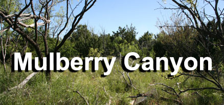 Mulberry Canyon